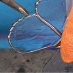 decorative soldering for stained glass